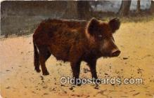 pig001090 - Razor Back Hog  Postcards Post Cards Old Vintage Antique
