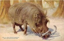 pig001095 - East African Wart Hog New York Zoological Park, NY, USA Postcards Post Cards Old Vintage Antique