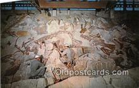 pre000008 - Reliefing Fossil Dinosaur Bone Dinosaur National Monument, Utah, USA Postcards Post Cards Old Vintage Antique