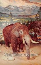 pre000044 - Mastodon New York State Museum, Albany, USA Postcards Post Cards Old Vintage Antique