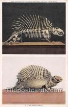 The Naosaurus, American Museum of Natural History