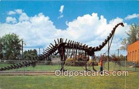 Authentic Cement Replica, Diplodocus