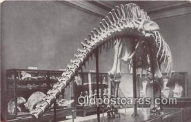 Dinosaur Skelton