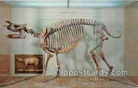 Science Museum, Rhinoceros