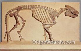 Visitor Center Oreodont Fossil Exhibit