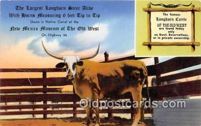 Texas Longhorn, New Mexico Museum of the Old West