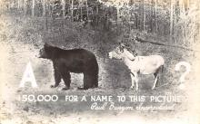 rep010004 - Bear and Donkey Real Photo Postcard Postcards