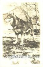 rep010020 - Husky Dog, Fort St. John, British Columbia, B.C.  Real Photo Postcard Postcards