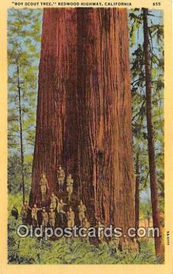 Boy Scout Tree