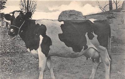 sha200077 - Old Vintage Shaker Post Card
