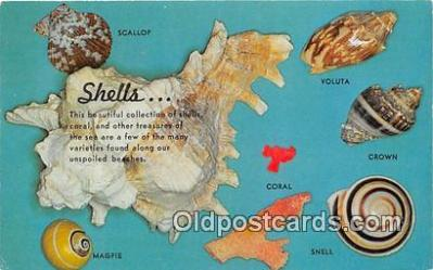 she001010 - Scallop, Magpie, Coral  Postcards Post Cards Old Vintage Antique