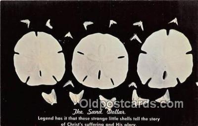 she001019 - Sand Dollar Holy Christmastide Postcards Post Cards Old Vintage Antique