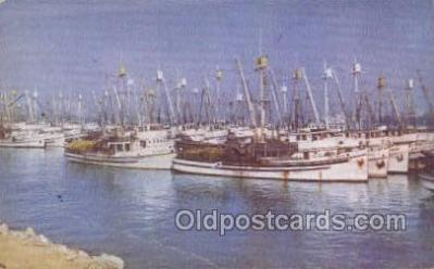 shi020176 - Fishing Fleet San Pedro Harbor Sail Boats, Sailing, Ship Postcard Postcards