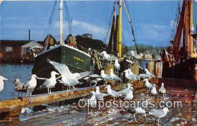 shi020762 - Feast of the Gulls  Ship Postcard Post Card