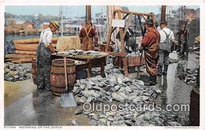 shi053163 - Weighing up the Catch  Ship Postcard Post Card