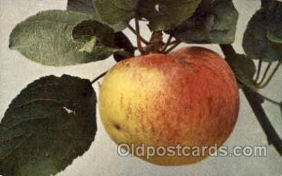 Apfel, Charlamowsky
