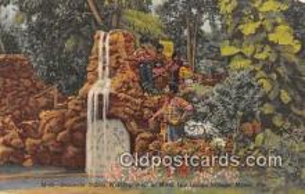 sem000096 - Seminole Indians Postcard