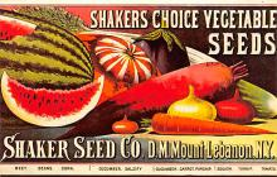 sha500381 - Old Vintage Shaker Post Card