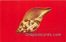 she001024 - Fasciolaria Tulipa  Postcards Post Cards Old Vintage Antique