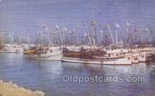 shi020176 - Fishing Fleet San Pedro Harbor Sail Boats, Sailing, Ship Postcard Postcards