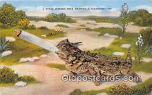 Texas Horned Toad Smoking Smoking Postcard Postcards