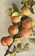 stl001014 - Apfel, Marmoisier Still Life Postcard Post Cards Old Vintage Antique