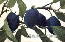 stl001022 - Prunus Domestica, Italienische Zwetsche Still Life Postcard Post Cards Old Vintage Antique