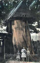 stu001012 - pioneer Residence of Cowlitz Stunt Stunts Postcard Post Card