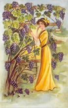 sub000457 - Woman standing by a vineyard of purple grapes