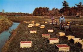 sub001261 - Ocean Spray Cranberries, INC., Hanson, MA, USA