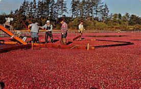 sub001407 - Craberry Harvest