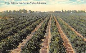 sub001413 - Drying Raisins, San Joaquin Valley, CA, USA
