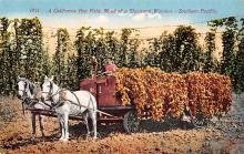 sub001431 - A California Hop Field, Road of a Thousdan Wonders - Southern Pacific