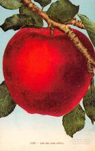 sub013767 - The Big Red Apple  Postcard