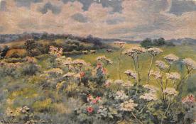 sub015231 - Field of Flowers  Postcard