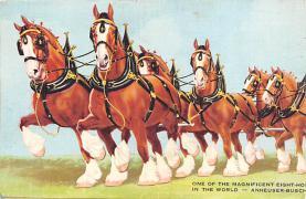 sub015353 - Budweiser Horses Double Postcard Postcard