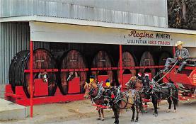 sub015561 - Regina Winery World's Smallest Horse Hitch Postcard