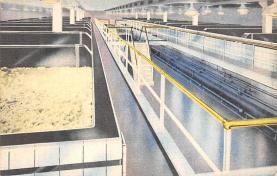 sub015631 - New Starting Cellar Budweiser, Amheuser Busch, St. Louis MO USA Postcard