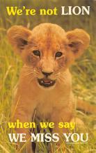sub063259 - Lion Post Card