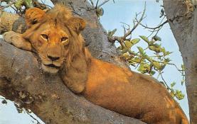 sub063263 - Lion Post Card