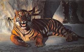sub063269  Tiger Post Card