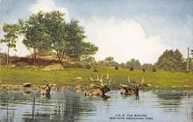 sub063275  Elk Bathing New York Zoo Post Card