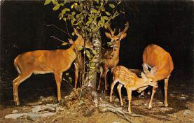 sub063283  Deer Post Card