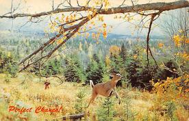 sub063285  Deer Post Card