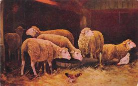 sub063309  Sheep Post Card
