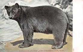 sub063375 - Bears Post Card