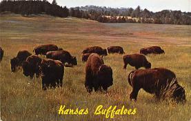 sub063461 - Buffalo Post Card