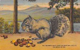 sub063475 - Chipmunk Post Card