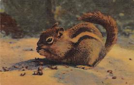 sub063477 - Chipmunk Post Card