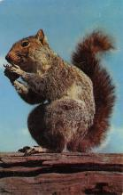 sub063483 - Chipmunk Post Card